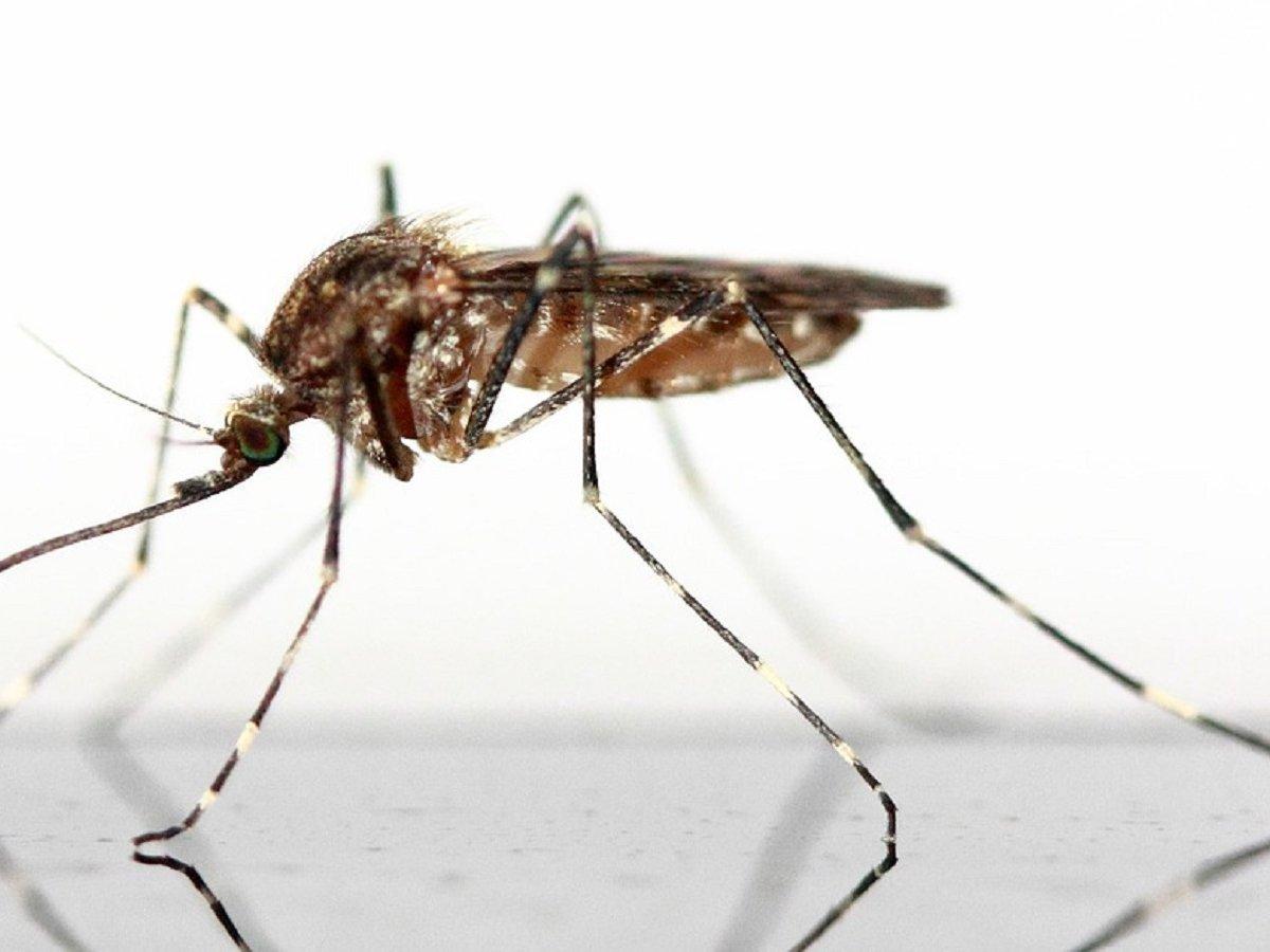 Дабстеп — отличный репеллент от комаров. Проверено учёными