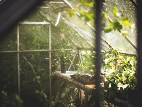 Российские ботаники спасут Францию от исчезновения растений