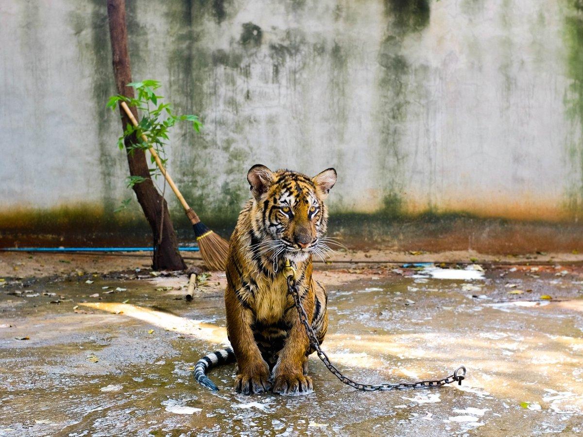 Группа защитников животных спасла 47 зверей из зоопарка в секторе Газа (видео)