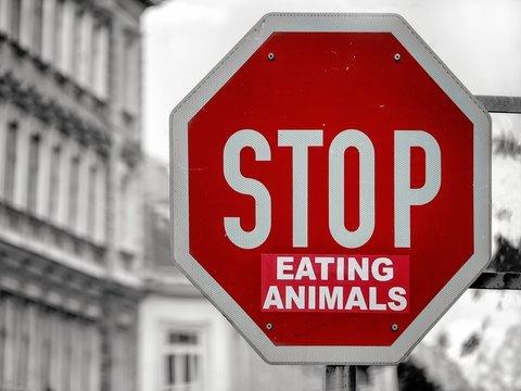 Освободите свинку! — В Австралии проходят акции протестов защитников животных