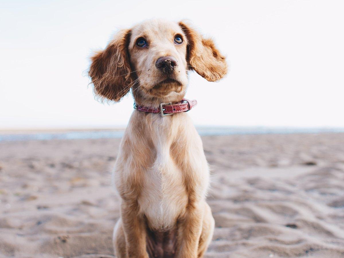 Пёсий марафон: собака по кличке Кактус покорила Сахару (фото, видео)