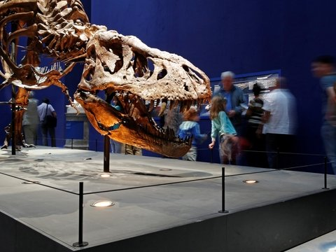 Охотник за ископаемыми продаёт динозавра прямо из музея. Может себе позволить