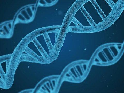 Во всём виноваты гены: учёные обнаружили мутацию, подавляющую аппетит