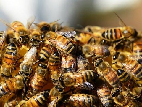 Пчёлы Нотр-Дама пережили пожар, хотя все думали, что нет (фото)