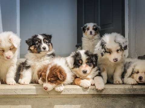 """Закон Люси"": в Британии запретят продавать котят и щенков в зоомагазинах"