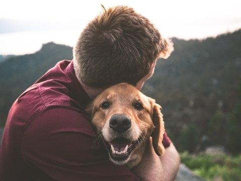 Люди любят собак не просто так: желание завести пёсика заложено в ДНК