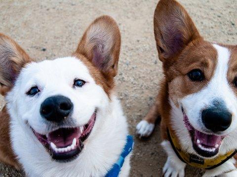 """Китаец назвал своих псов """"незаконными"""" именами и оскорбил власть. Его арестовали"""