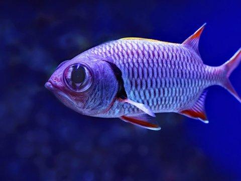 Американские военные заставят рыб и морских животных шпионить за врагами