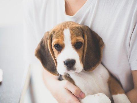 Собаки против стресса: что такое канистерапия, и как пёсики помогут на экзамене?