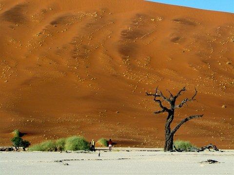 В катарских пустынях теперь растут овощи — вот она, сила экономических санкций