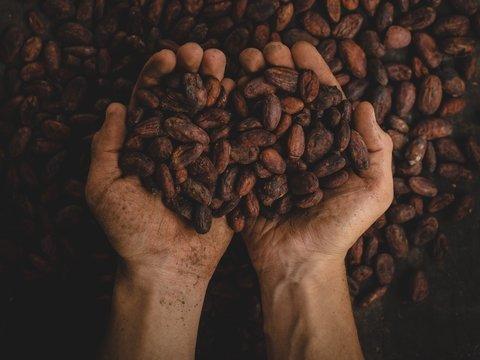 Европа может остаться без шоколада, а всё из-за непомерной жадности импортёров