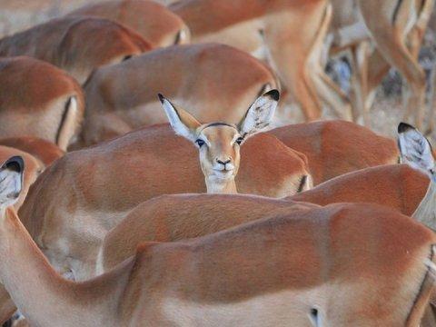 Из-за засухи власти Намибии разрешили продать диких животных из заповедников