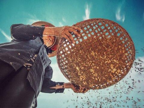 Рис дружбы: Южная Корея пожертвовала голодным северянам 50 000 тонн риса