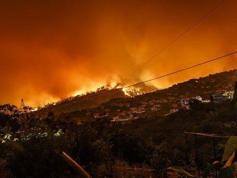 Лесные пожары в Каталонии за несколько часов уничтожили 4 000 гектаров леса
