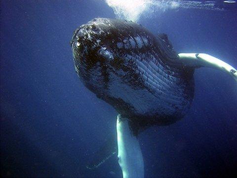 Япония снова убивает китов на продажу