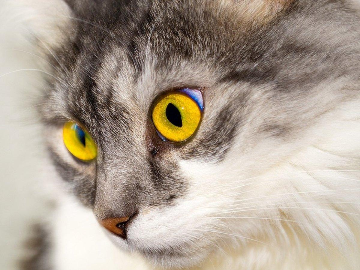 Как бороться с котом, который тащит в дом дохлых мышей? Технологичный лайфхак