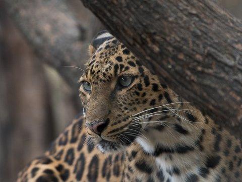 """В Аргентине ягуаров признают """"нечеловеческими личностями"""", чтобы спасти"""