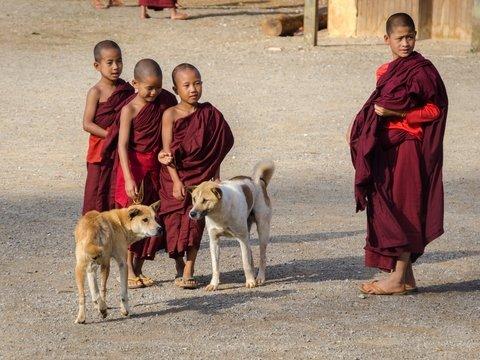 Собаки Дхармы: буддийские монахи поют псам молитвы и борются с бешенством