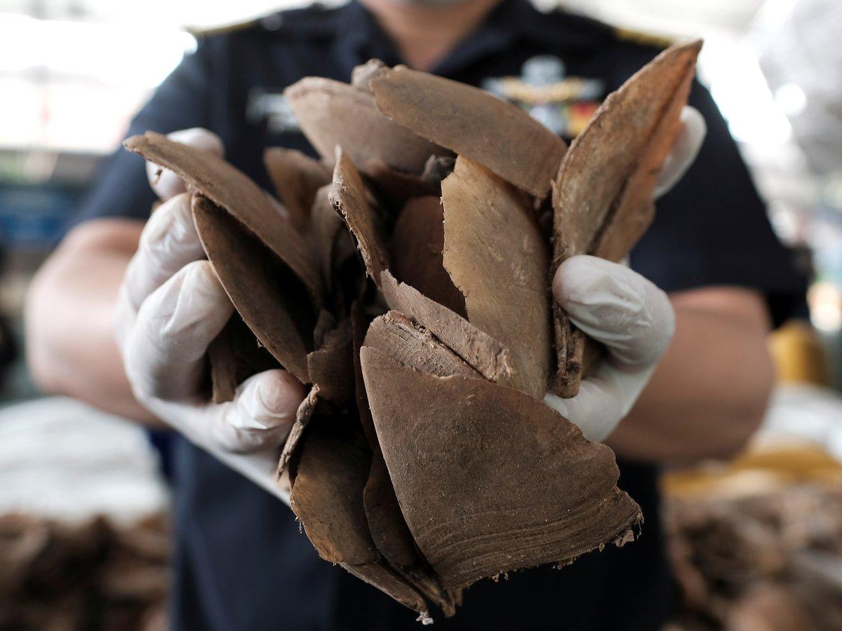 В Сингапуре задержали контрабандистов с рекордными 8 тоннами слоновьих бивней