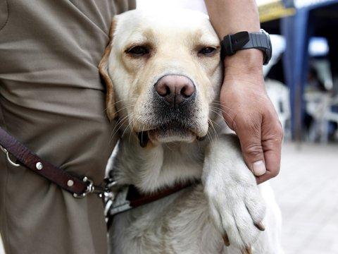 Как дрессировать собак: хороший мальчик может быть на дистанционном управлении