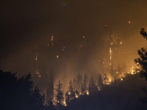 Пожары в Сибири — можно и нужно ли с ними бороться? Отвечают эксперты