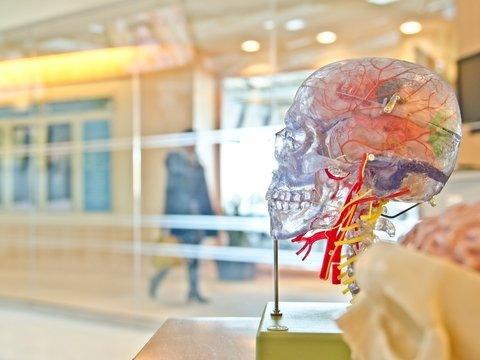 Нейробиологи научили пациентов с параличом говорить: за них всё пишет ИИ