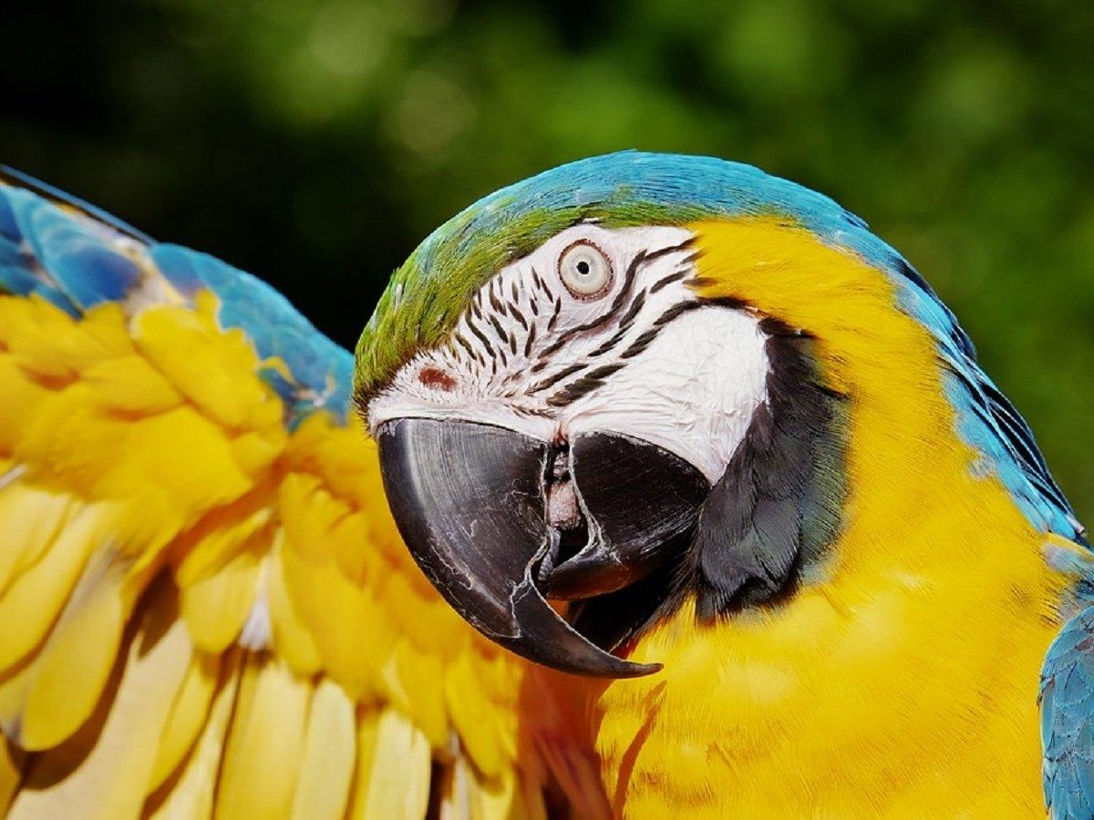 В Новой Зеландии нашли гигантского попугая. Он размером с ребенка