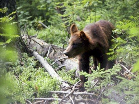 Вместо того, чтобы спасать зверей от пожаров в Сибири, их буду отстреливать