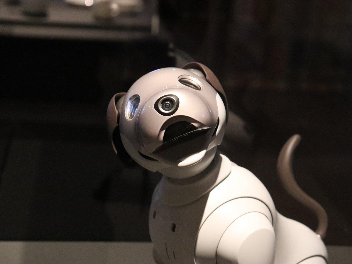 Китайцы будут ездить на робособаках. Ездовых роботов запрягают в упряжки (видео)