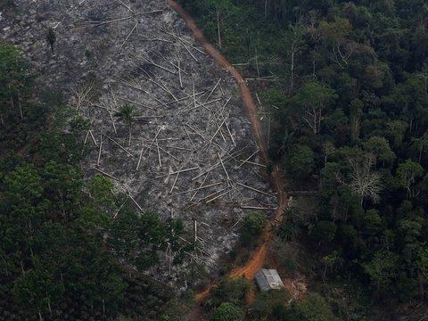 Норвегия и Германия больше не будут финансировать спасение лесов Амазонии