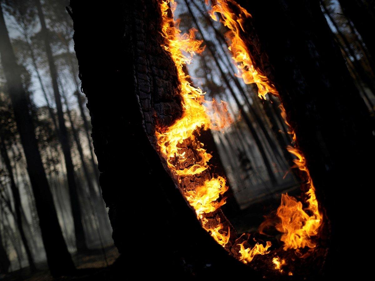 Огонь уничтожает самые большие джунгли в мире — горят леса Амазонии (ФОТО)
