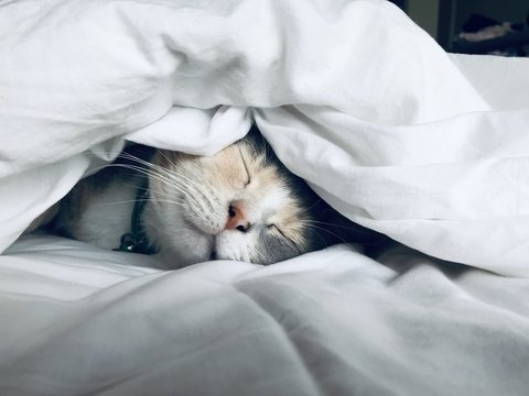 Спать всего 4 часа и отлично высыпаться? Это реально, если есть генная мутация