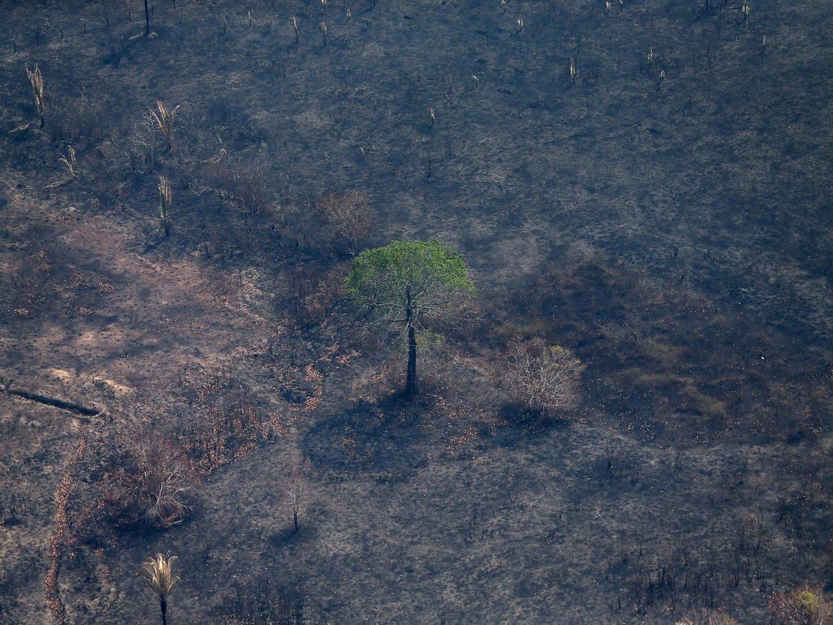 Леса Амазонии губят не только пожары — от людей вреда не меньше, чем от огня
