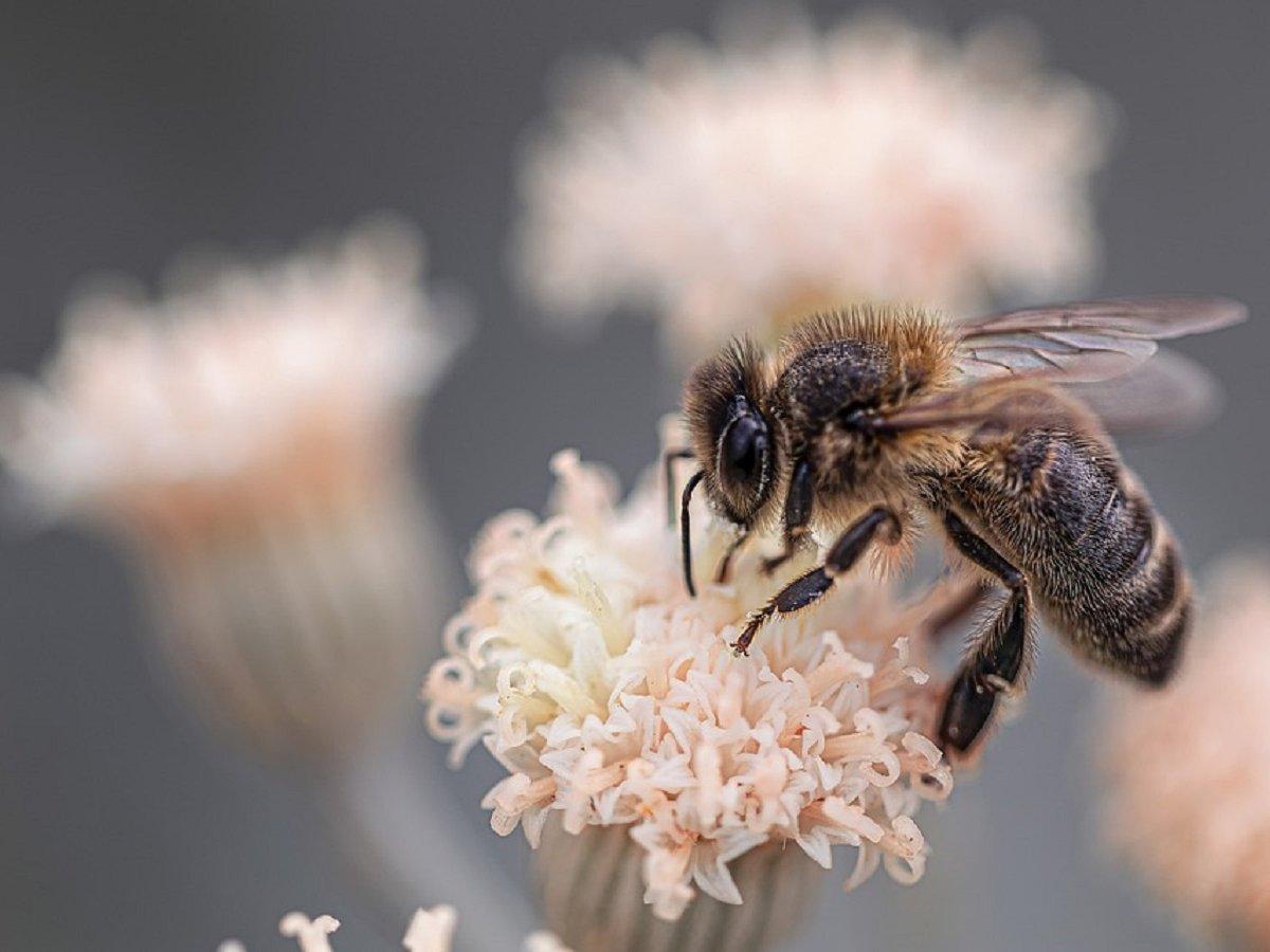 Зоолог стал рокером и спел про пчёл, чтобы спасти их от вымирания (видео)