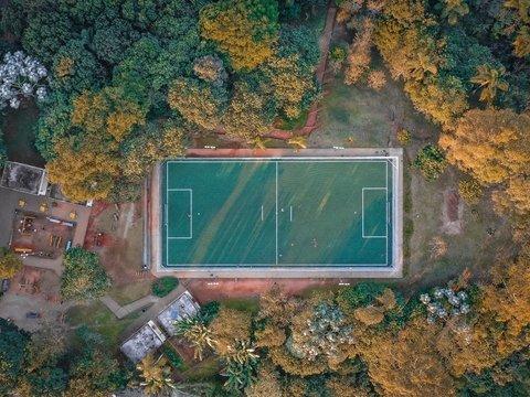 Искусство и экология важнее футбола: художник превратил стадион в лес (фото)