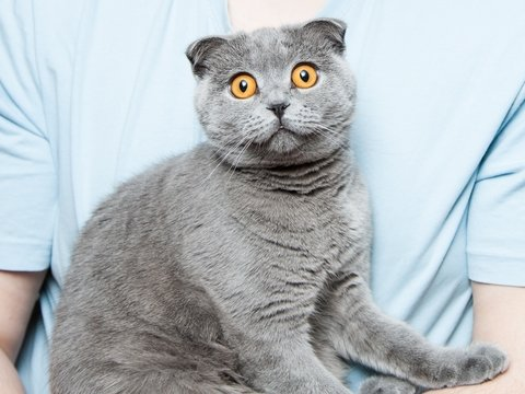 Привыкли считать кошек надменными снобами? На самом деле они любят людей