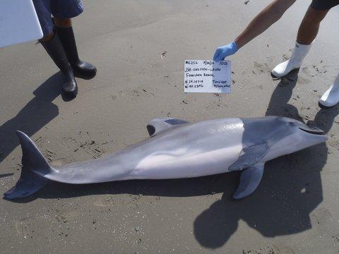 Более 200 дельфинов выбросились на берег в Африке, и никто не понимает почему