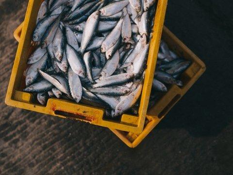 """""""Рыбий Армагеддон"""": рекам Австралии угрожает высыхание, так что рыб эвакуируют"""