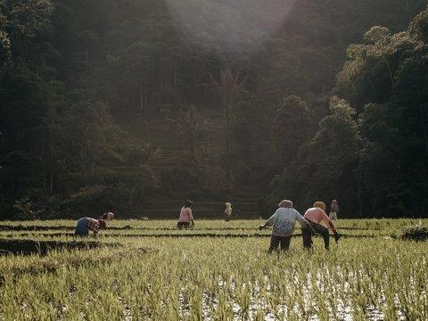 Торжество прогресса: жители деревушки у КНДР наслаждаются жизнью с 5G