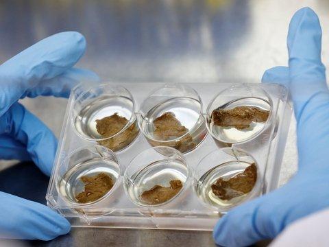 На МКС вырастили мясо: корова не нужна — только лаборатория