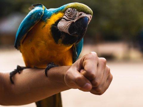 Мадрид хочет избавиться от попугаев. Бороться с птичками будут хитрыми методами