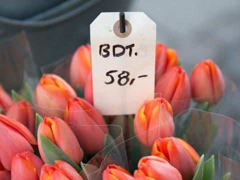 Цветочный скандал в Амстердаме: лишь 1% тюльпановых луковиц настоящий