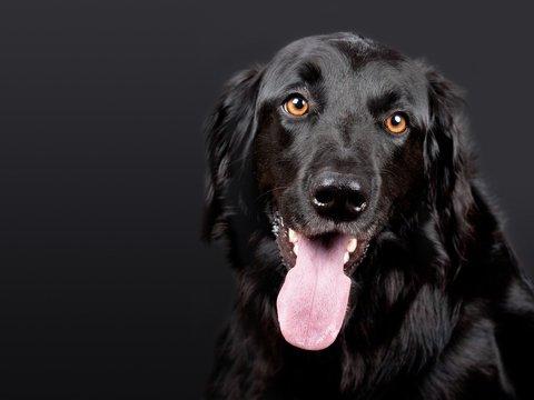 Логопед из США научила свою собаку говорить (видео)
