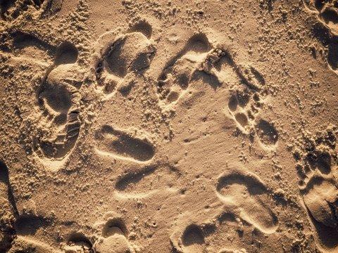 Георадар увидел следы древних людей и мамонтов — они были скрыты 12 000 лет