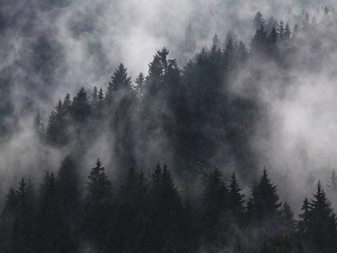 Охотники Канады решают, кто поселился в их лесах. Это йети или злой дух? (видео)