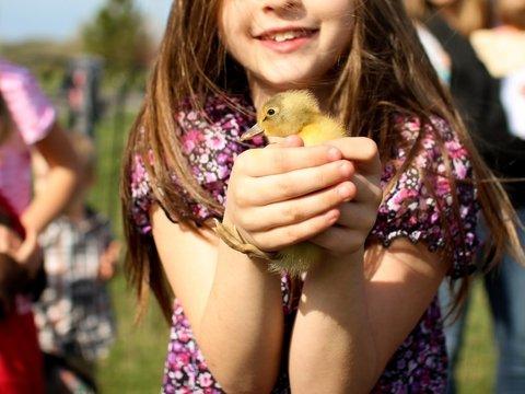 ChickTok: в Индонезии чтобы отучить детей от смартфонов, им раздали цыплят