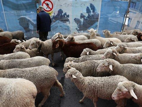 В Чёрном море перевернулся корабль с 14 600 овцами, часть животных спасли