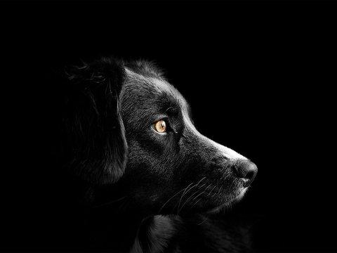 Волк или собака? В Сибири учёные нашли 18 000-летнего щенка (фото)