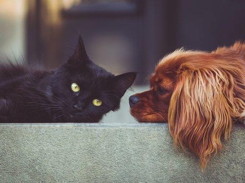 Подборка добрых историй про домашних животных