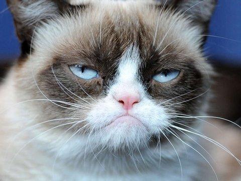Читай по мордочке: котики выражают свои эмоции мимикой, но люди их не понимают
